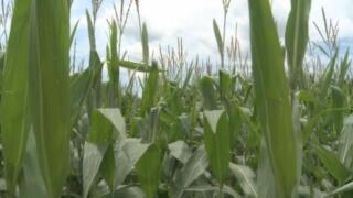 crops+web+stan.jpg
