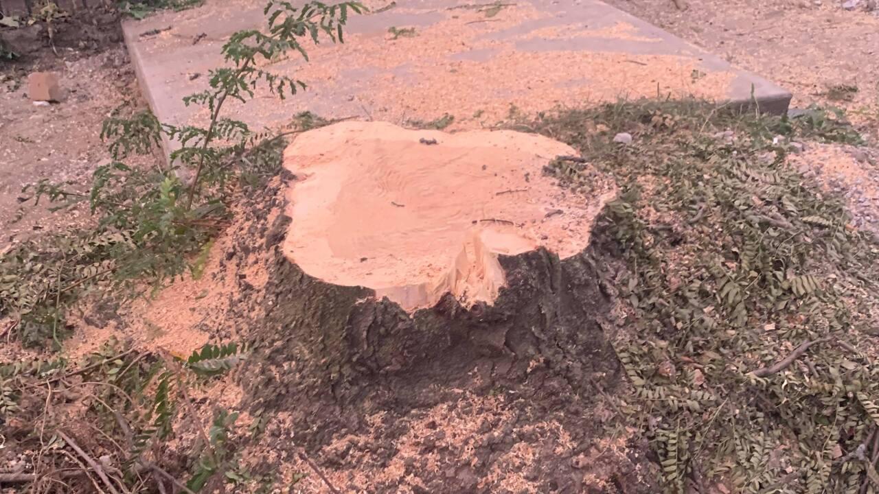 Fulton trees down