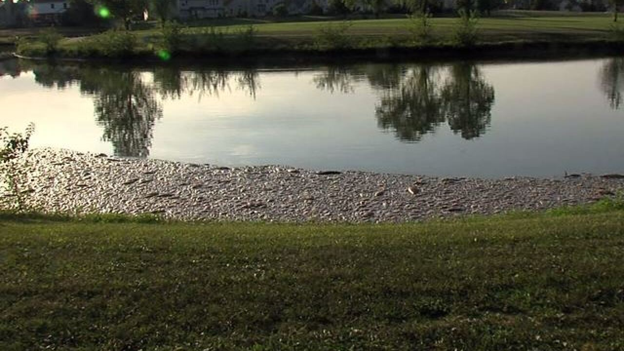 Dead fish, foul smell at pond on Indy's NW side