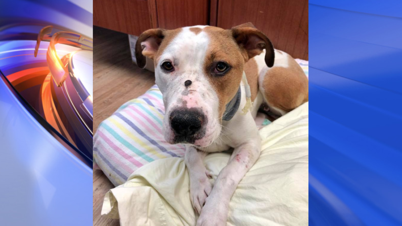 More than $1K raised for dog found shot in the face in VirginiaBeach