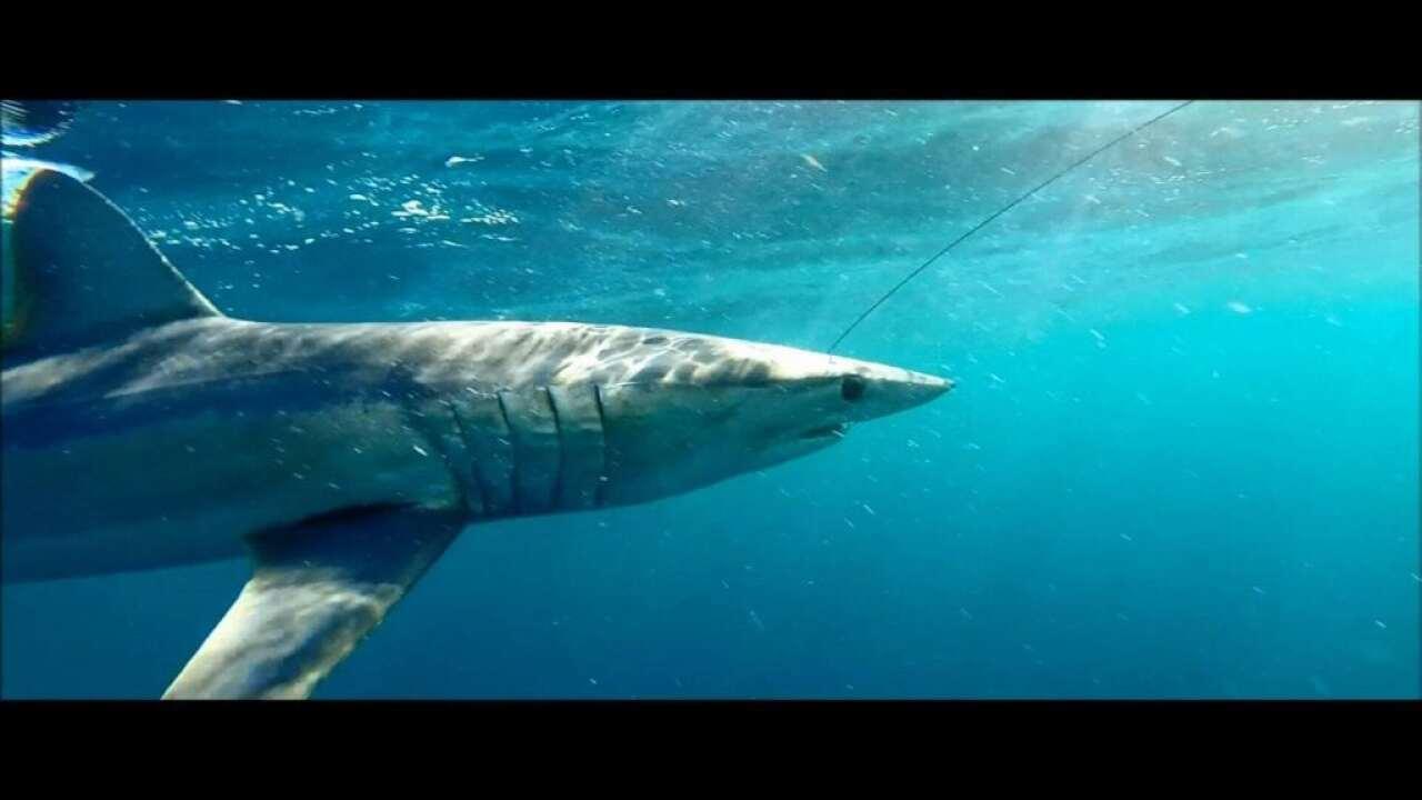 Harte Research Institute hosts Shark Week screening