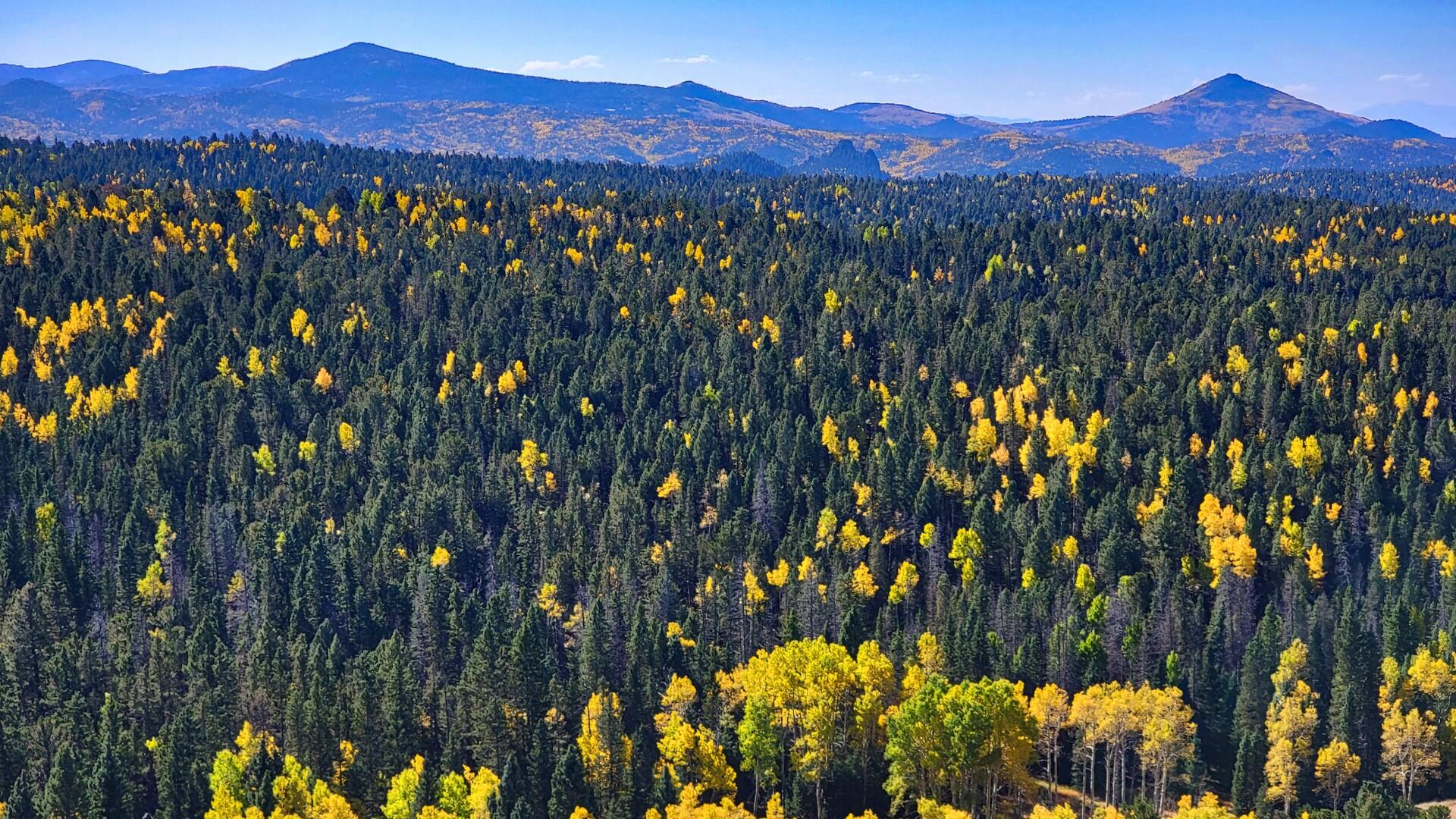 2Mueller State Park Russell Howell 1.jpg