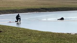 Wayne County pond rescue