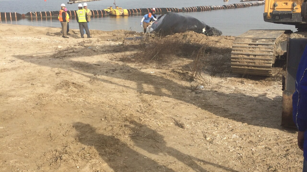 Deceased whale towed to shore at Portsmouth's CraneyIsland