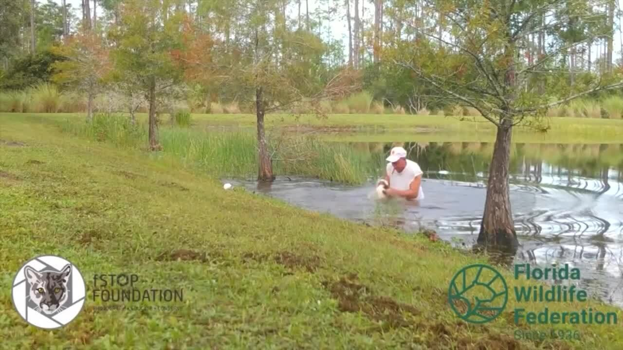Richard Wilbanks rescues puppy from gator in pond