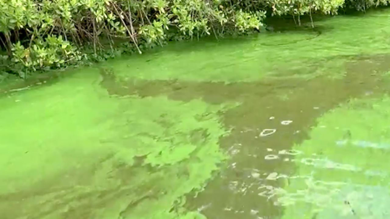 Congress Ron DeSantis, Brian Mast to tour algae-ridden areas