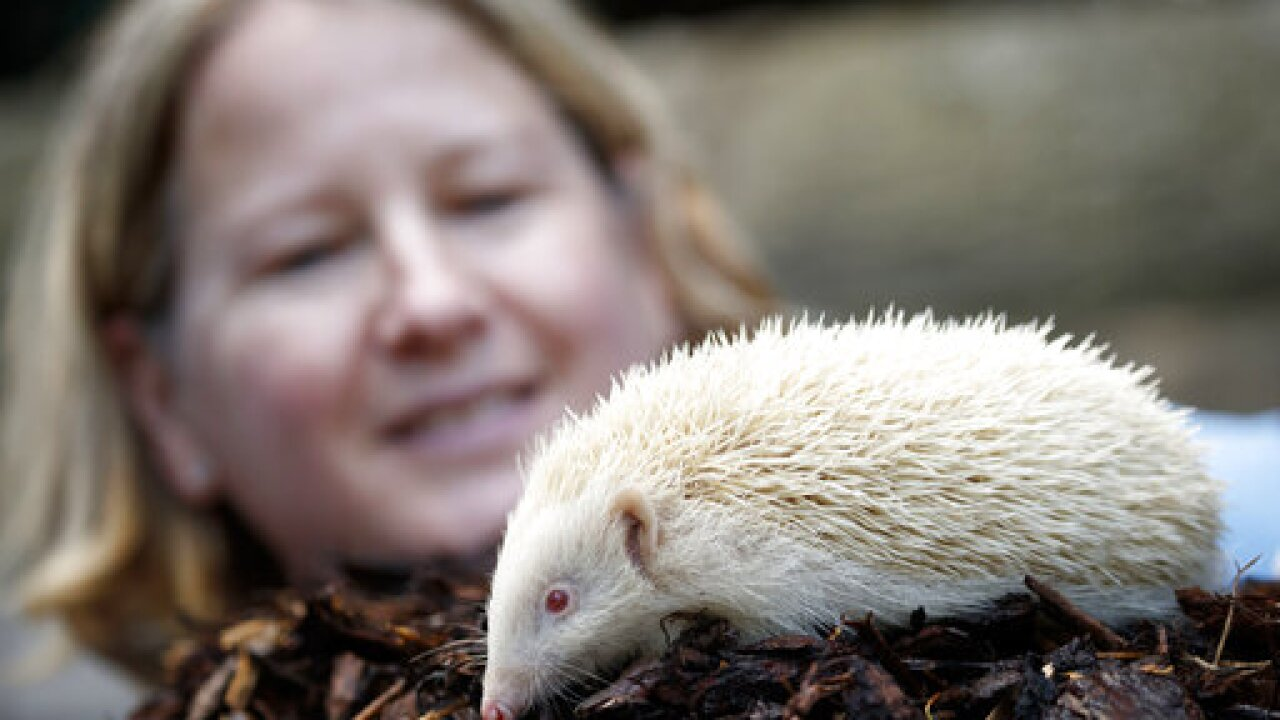 Salmonella outbreak tied to pet bearded dragons, hedgehogs