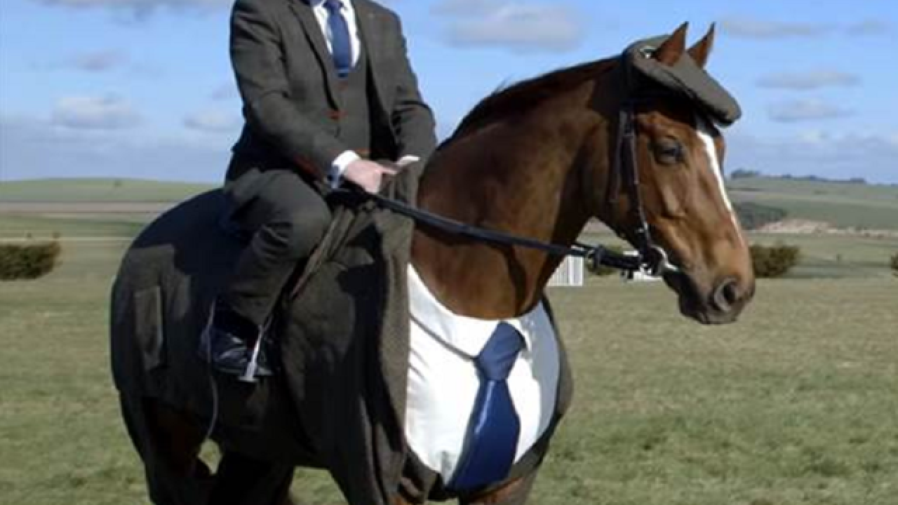 Horse turns heads in a dapper Tweed suit
