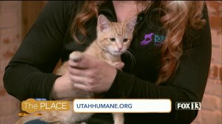 400 cats in four weeks: How a local shelter is making it easy for you to adopt afeline