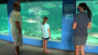 sarasota-aquarium.png