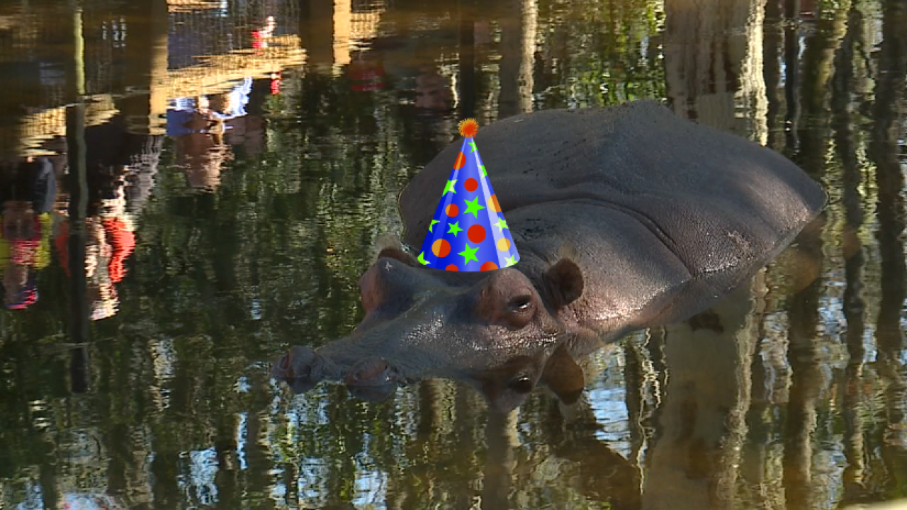Lu the hippo.png
