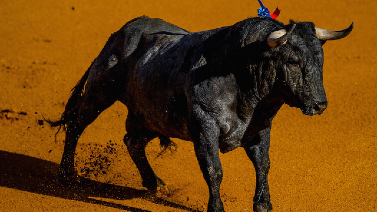 Man killed by bull in Spanish safari park