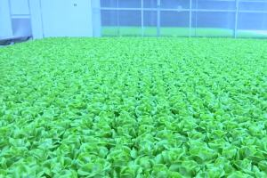 Montana company hopes to become a gamechanger in indoor agriculture