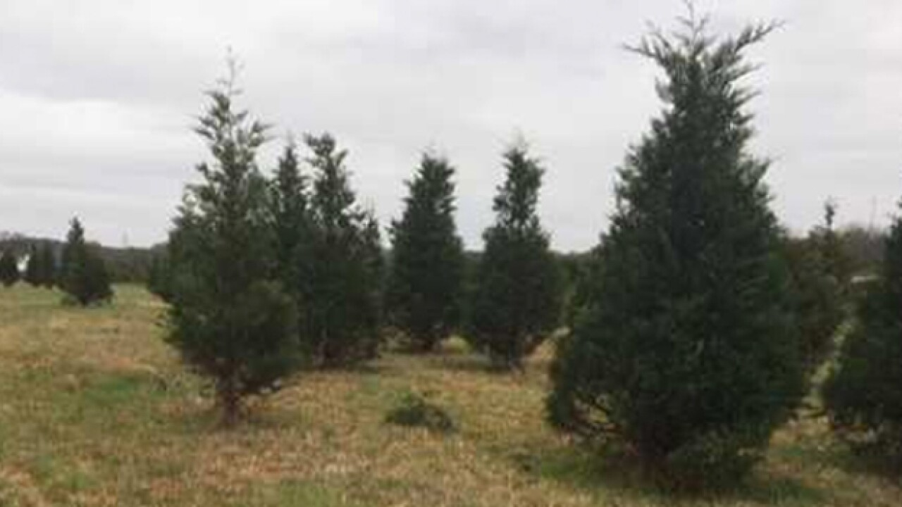 Christmas tree sales double at farm