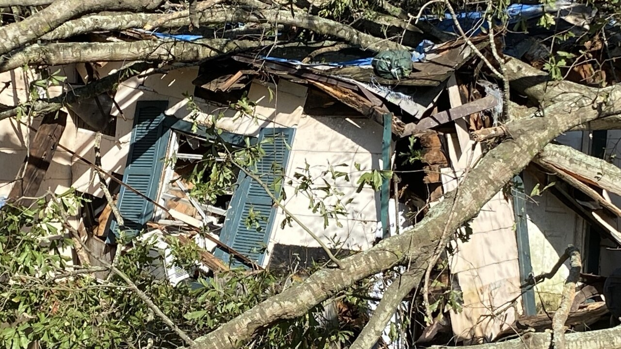 Jeanette Street tree crushes home.jpg
