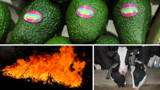 Avocados, Wildfires, Dairy Farm