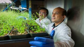 Dr. Venugopal Mendu has been selected as the Winifred Asbjornson Plant Sciences Endowed Chair at Montana State University
