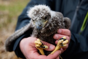 Eagle babies.jpg