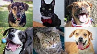 Adoptable-Pets-June-7.png