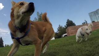 Hey, Denver: A new dog park just opened in the Barnum neighborhood