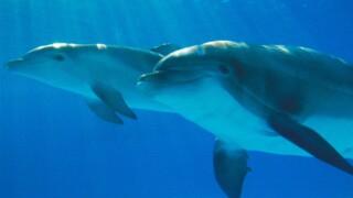 National Aquarium's eldest dolphin, Nani, dies
