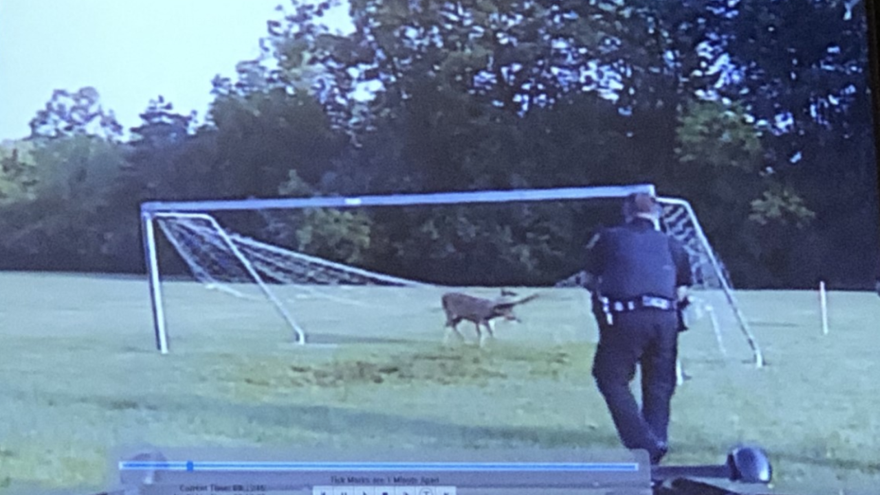 Dramatic deer rescue caught on officers' dash cam