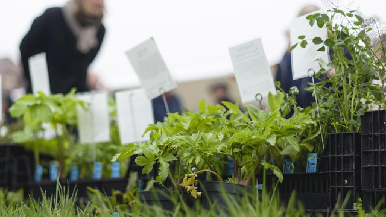 County Supervisors approve Chula Vista community gardening plan