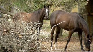 horses1.png
