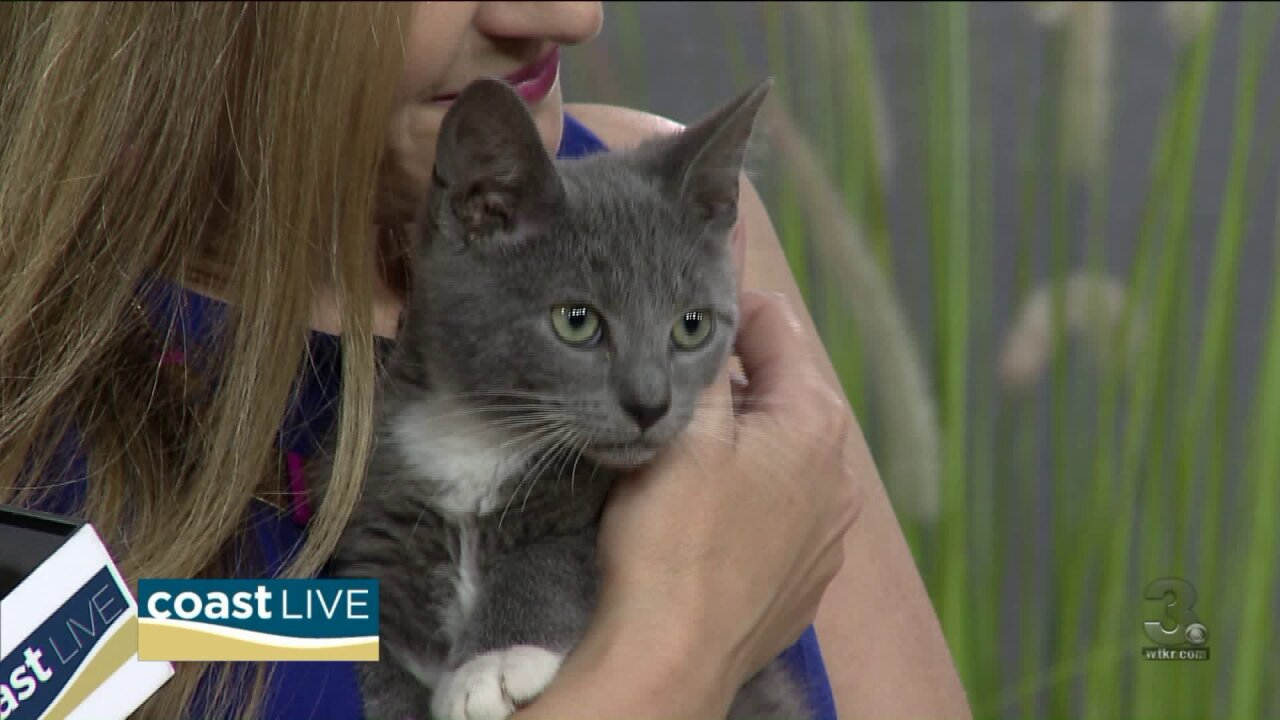 """We take the """"Git Up and Adopt"""" Challenge with Isle of Wight County Animal Shelter on CoastLive"""