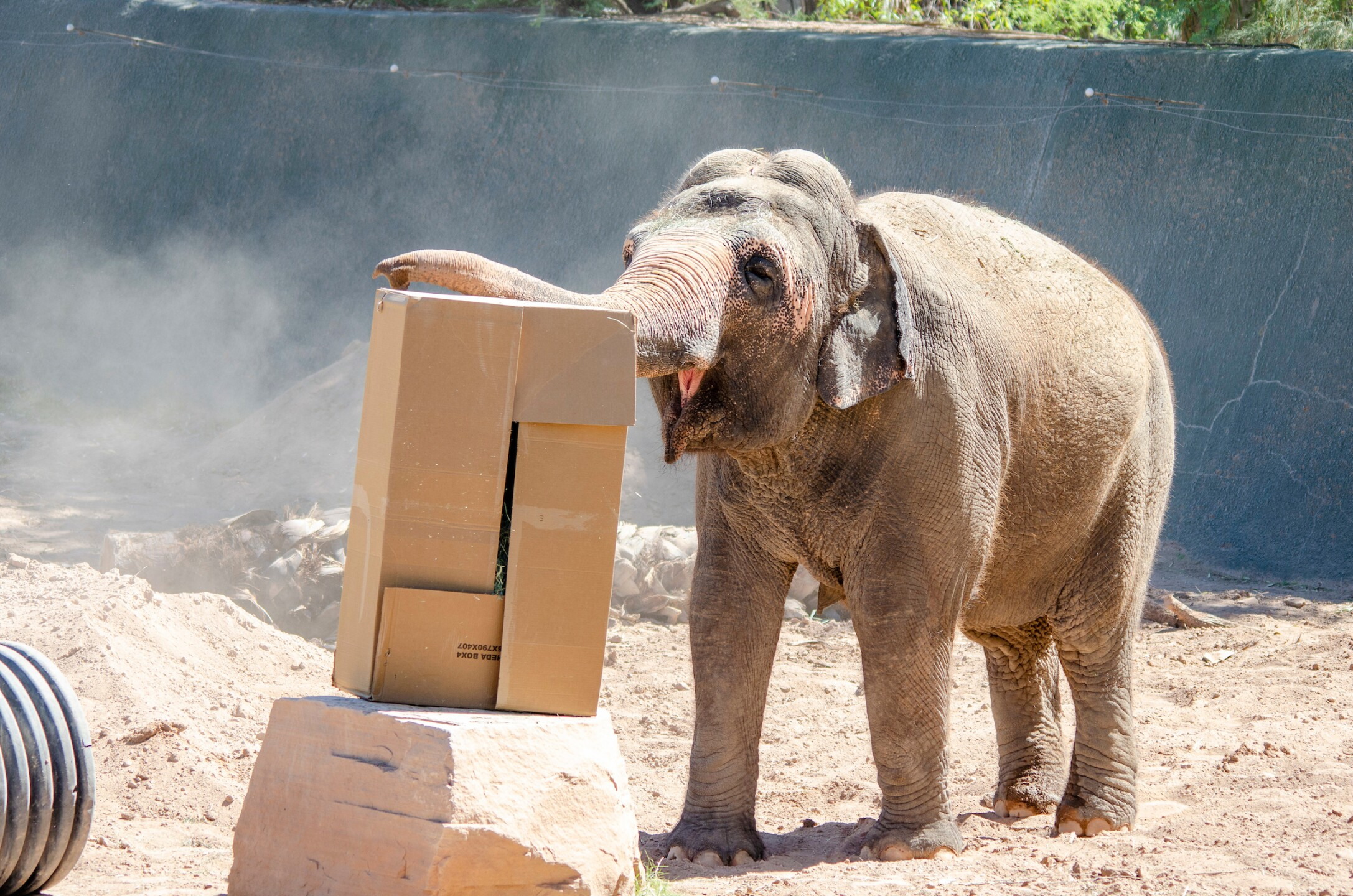 Reba Asian Elephant Phoenix Zoo - Handouts19.jpg