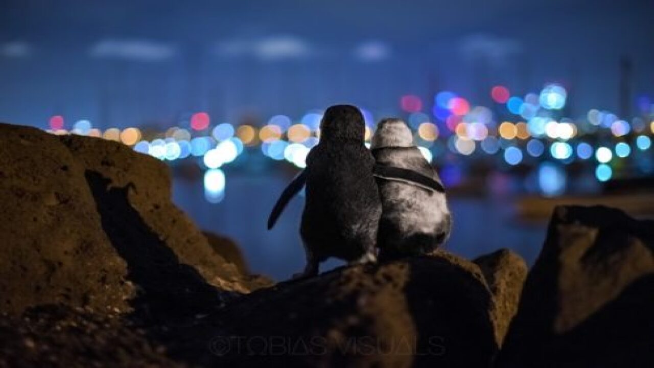 Photo Of 2 Widowed Penguins Hugging Wins 2020 Ocean Photography Award
