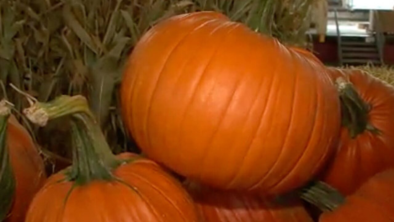 Friday is National Pumpkin Day!