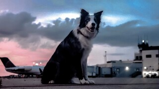 Hercules, the 3-year-old border collie charged with keeping birds and other forest-dwelling animals off Yeager Airport's runways and taxiways, is credited with dramatically reducing the number of wildlife strikes to aircraft at the Charleston airport, including a rare strike-free three-month period.