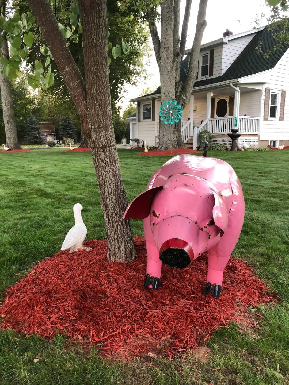 The Kelleys' pig