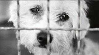 Dog in shelter generic