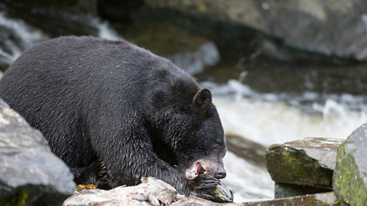 Black bear escapes, forces lockdown at Columbus Zoo