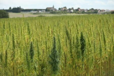 Industrial hemp bill changes to appease law enforcement