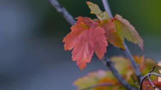 Fall foliage in Keene, N.H.
