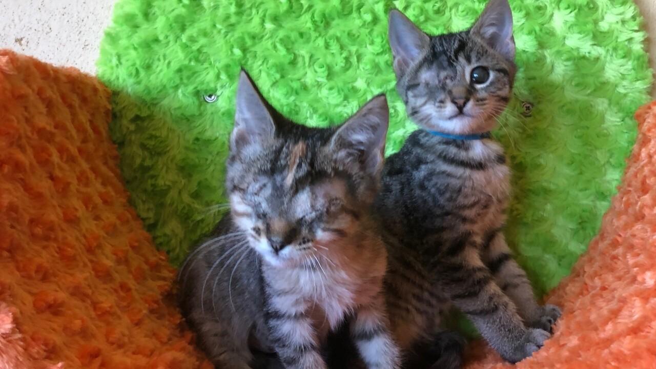 Blind kittens.jpg