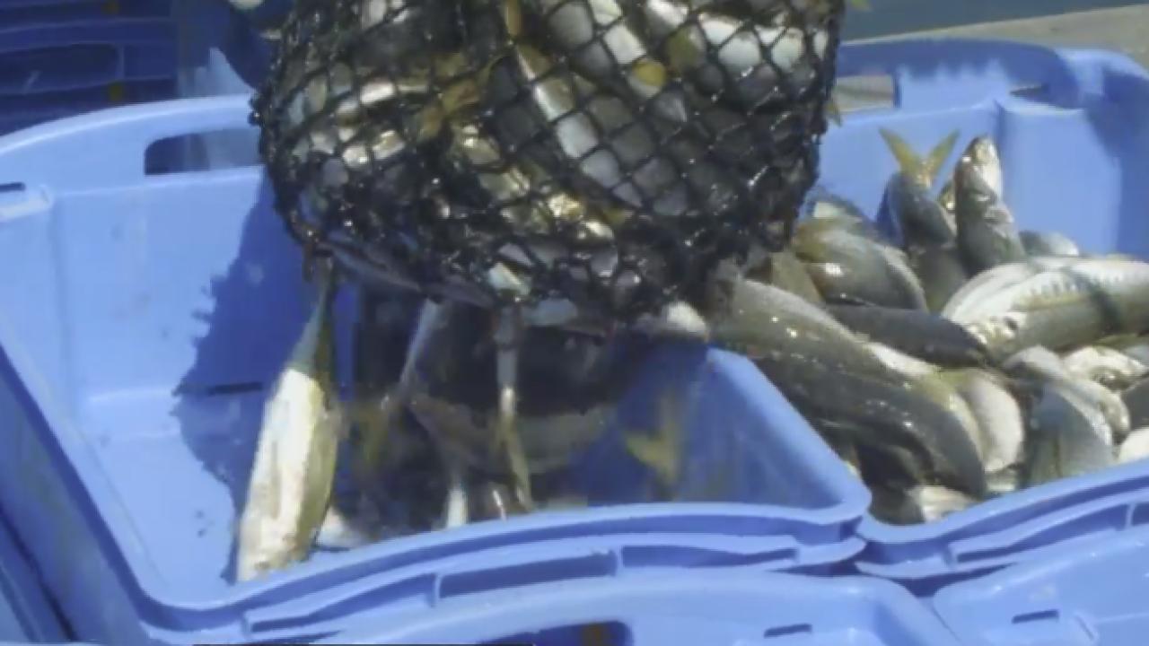 wptv aquaculture.PNG