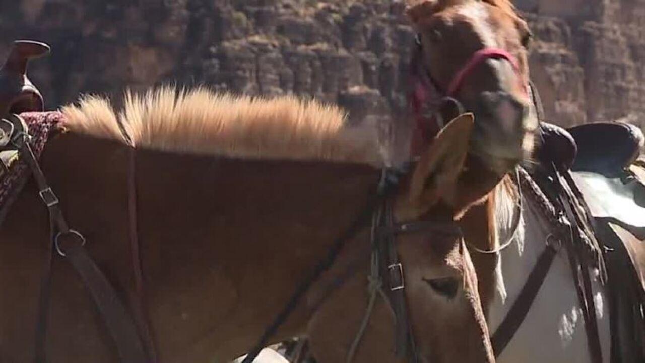 horse drone.JPG