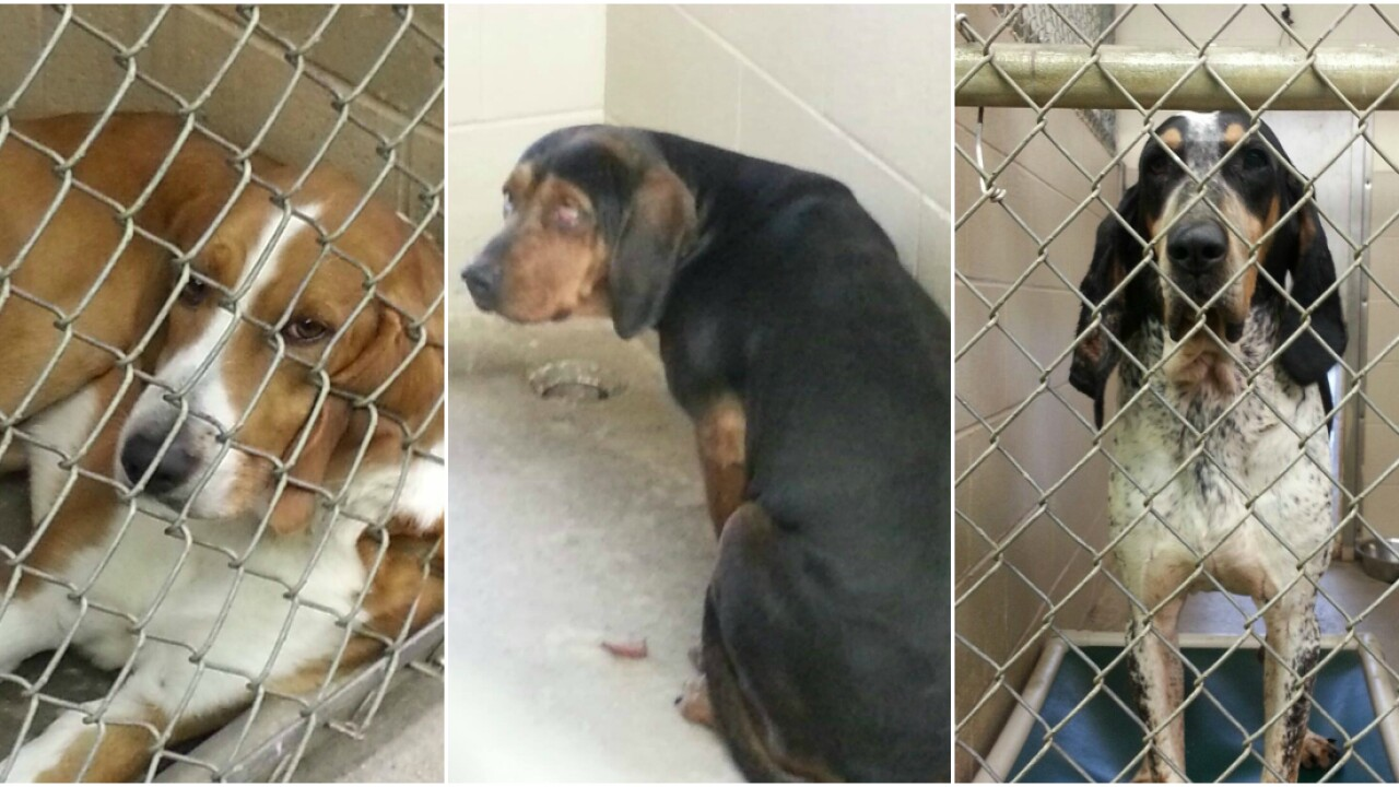 Who tossed these 3 dogs over animal shelterfence?