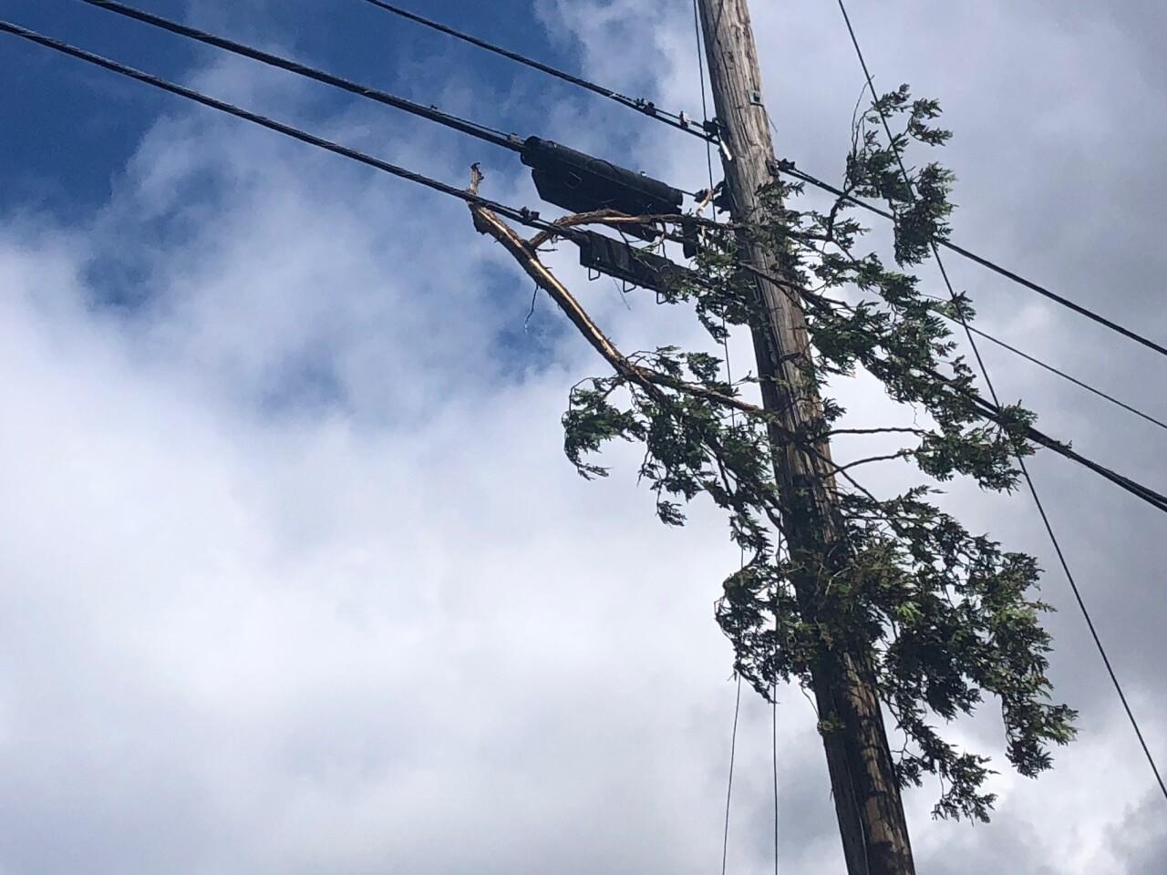 shelby tornado 5