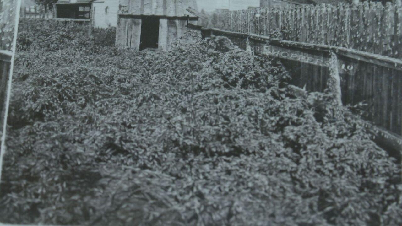 In 1898 Colorado Springs suffered a grasshopper invasion