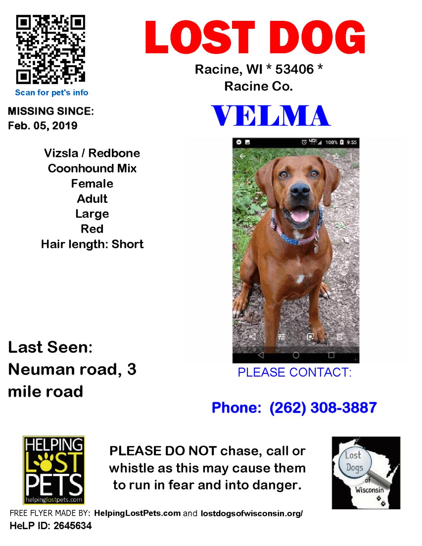 0205 Velma Viszla Adult.png