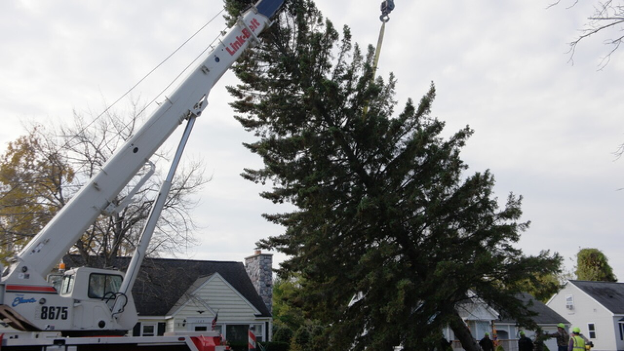 Picking the State of Michigan Christmas Tree