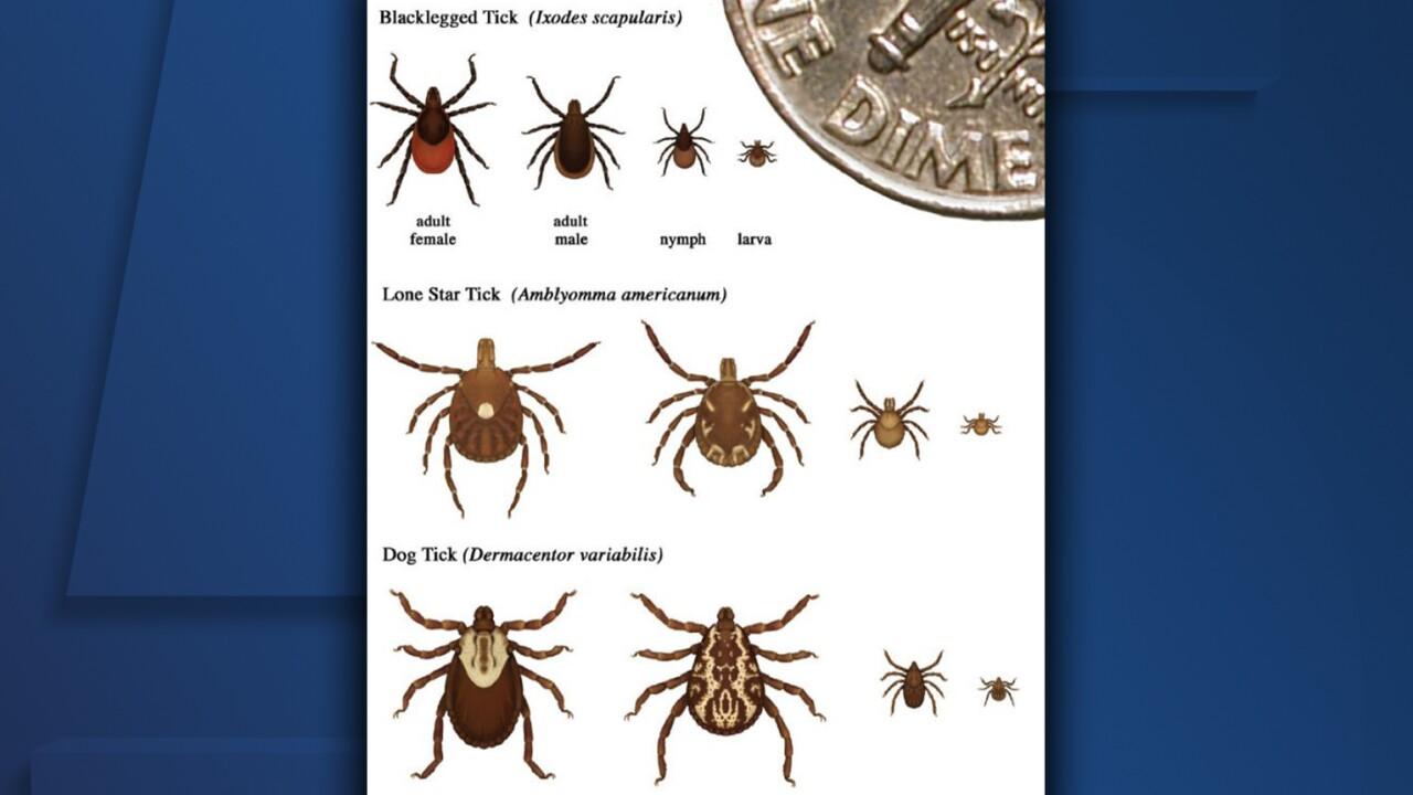 Types of ticks.jpg