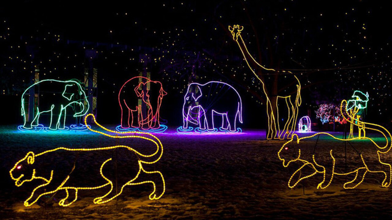GALLERY: Discover the magic of Zoo Lights at the Denver Zoo!
