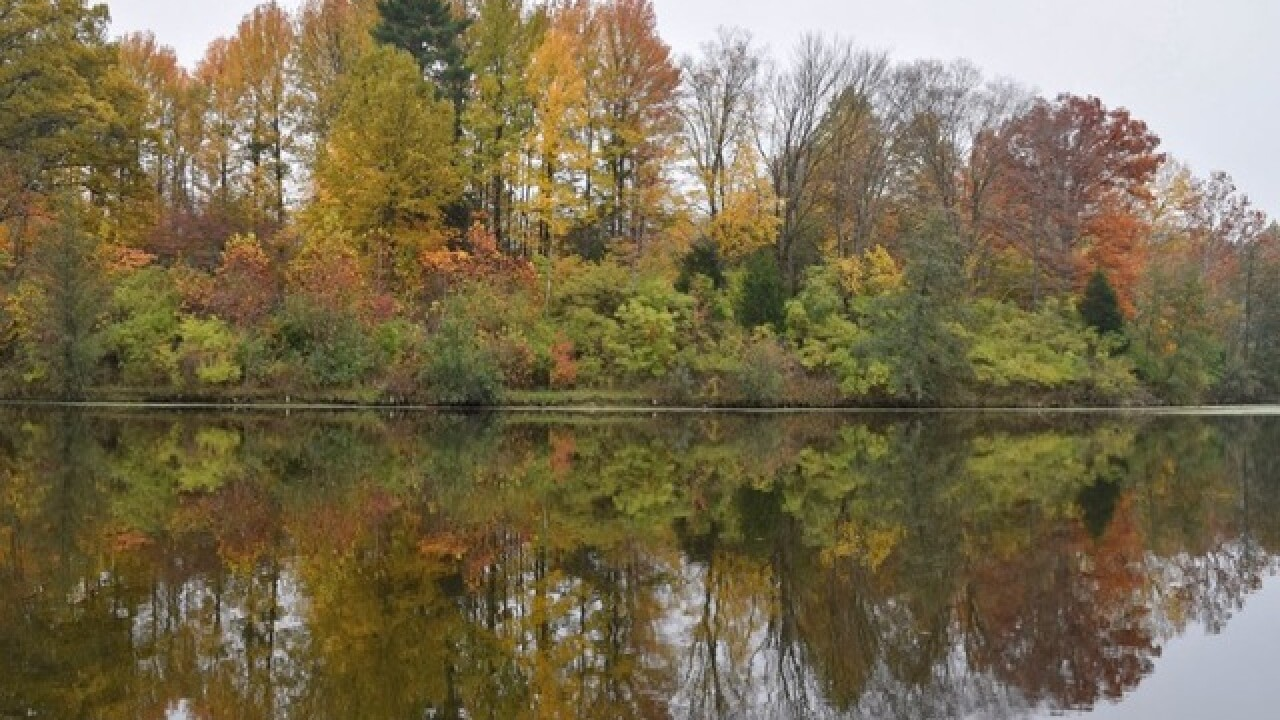 Will all this rain lead to vibrant fall colors?