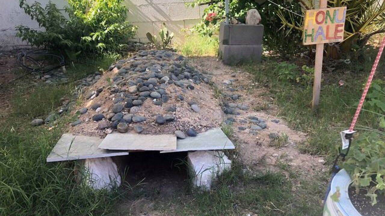 Want a tortoise? Las Vegas group seeks adopters